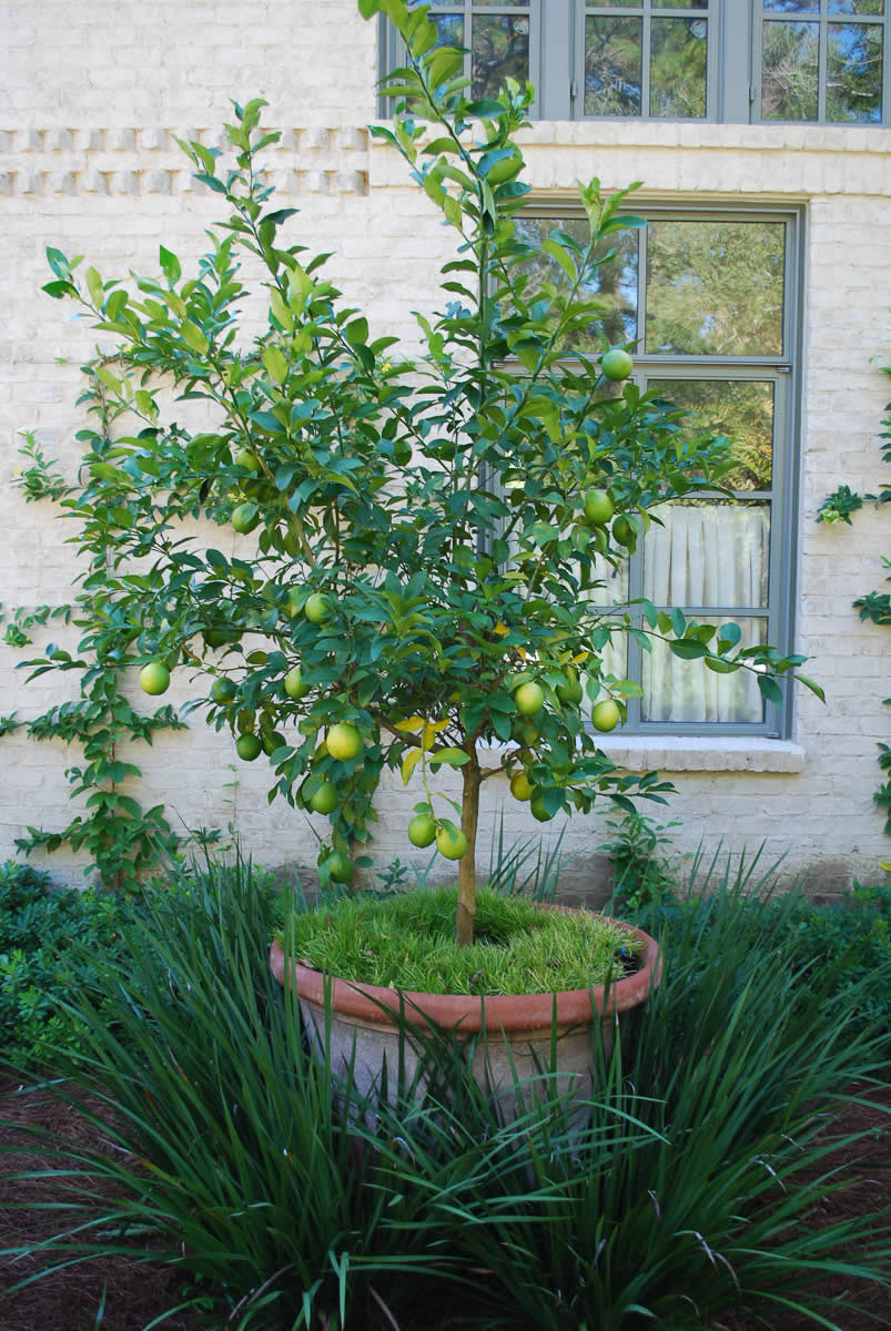Image Result For Home Garden Services