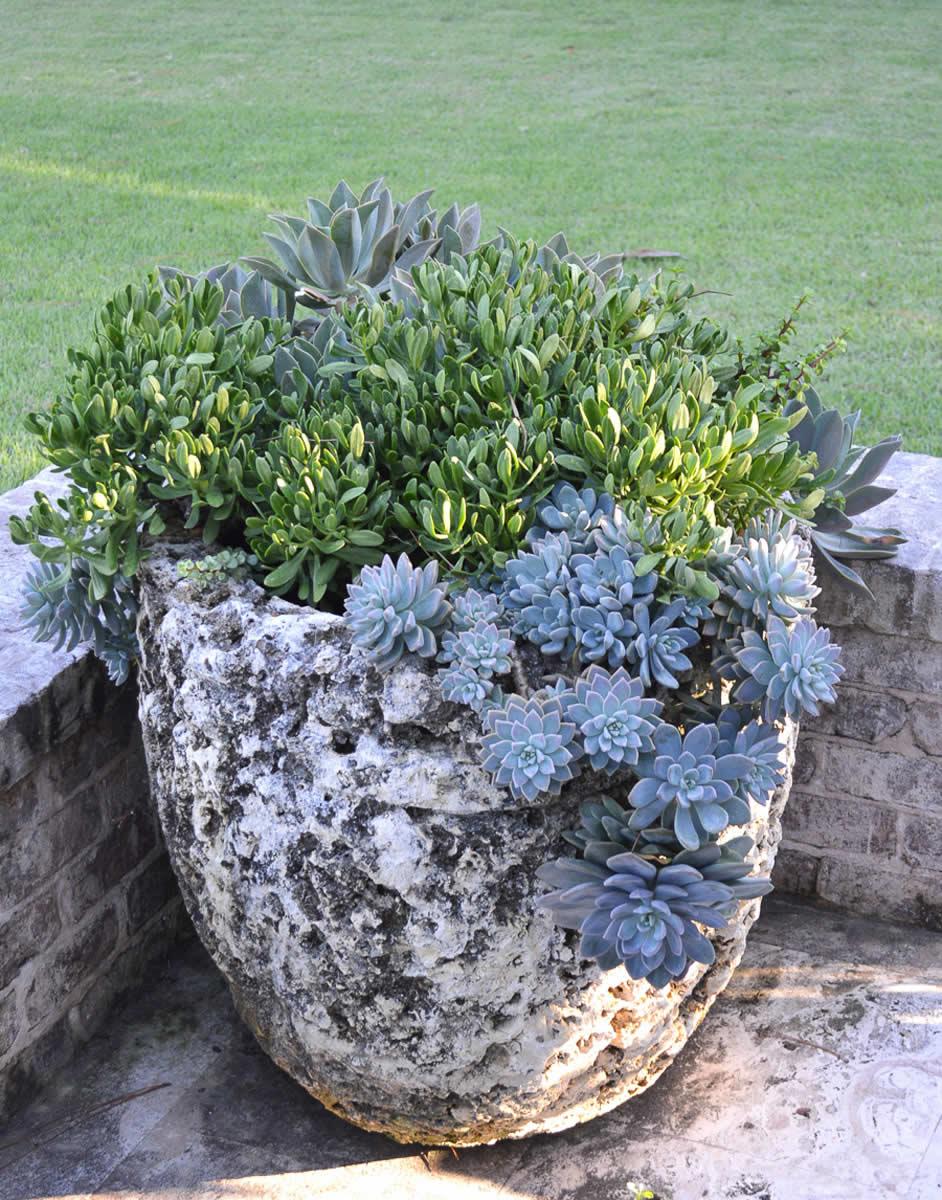 Alex Smith Garden Design, Ltd.